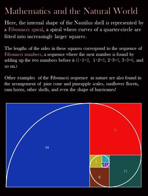 Nautilus math